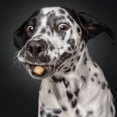 Hilarious Expressions Of Dogs Trying To Catch Treats In Mid-Air