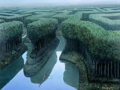 Like a hedge maze on a giant scale! Made of trees and navigated by boat
