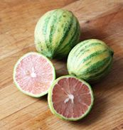 Citrus limon 'Pink Lemonade' - Variegated Dwarf Pink Lemon Tree