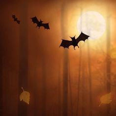 Check out these creepy Halloween iPad wallpapers and get into the real Halloween spirit. Halloween Geist, Creepy Halloween, Spirit Halloween, Ipad Air Wallpaper, New Wallpaper, Halloween Wallpaper, Winter Landscape, Winter Snow, Wallpapers