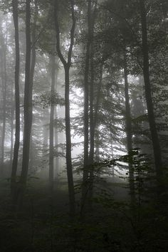 フォレスト, 秋, 霧, 木, 自然, 道路