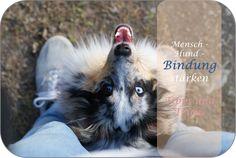 Mensch-Hund-Bindung! Viele Probleme im alltäglichen Leben mit dem Hund entstehen durch mangelnde Bindung zwischen dem Besitzer und seinem vierbeinigen Freund. Positive Verstärkung, Fox, Animals, Good Relationships, Doggies, Boyfriend, Parenting, Life, Animales