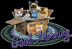Good Morning cute coffee kitty good morning good morning greeting good morning gif