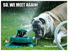 dog+sprinkler=Super funny pics, check them all out at the chive it made my day!