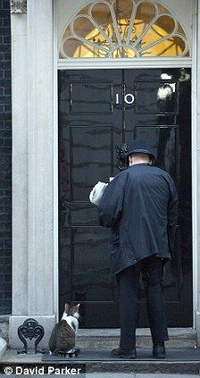 Larry the Downing Street cat waiting patiently for the door to open in Downing Street
