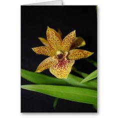 Propetalum orchid greeting cards