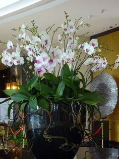 Use orchids, flowers and plants to decorate your home. Thirty five gorgeous ways to decorate with orchids, flowers, and plants. Feed your design ideas now. Hotel Flower Arrangements, Modern Floral Arrangements, Beautiful Flower Arrangements, Succulent Arrangements, Flower Centerpieces, Flower Decorations, Succulents, Silk Plants, Orchid Plants