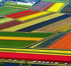 Holland, a fields of tulips
