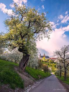 Blossming Seminary Garden and the Castle of Prague, Czechia