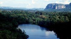 COP21: 3 países europeos respaldarán la preservación de la Amazonía colombiana: