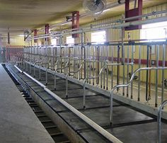 "Cow mattresses installed in tie stalls. These 1-5/8"" thick individual cow mattress pads are custom sized to fit your free stalls or tie stalls. A 5/8"" rebond foam core is completely enclosed in revulcanized rubber with a solid 1/2"" revulcanized rubber top and bottom. They will lower your bedding costs, increase milk production, keep cows healthy, happy and disease free."