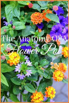 Creating a beautiful pot of flowers. Here's how... stonegableblog.com