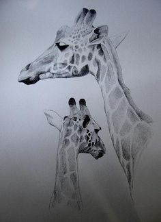 Girafas // Nanquim sobre papel (42x60)(abril de 2009) // Giraffes // Ink on paper (42x60) (April 2009) //