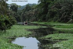 Canal Tour  Tortuguero, Costa Rica
