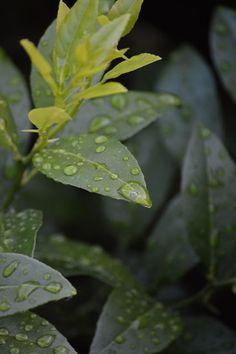 123 best garden inspiration images landscaping key largo florida rh pinterest com