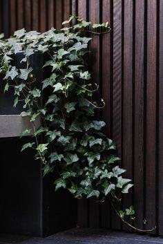 Clever use of space and a green-on-green palette has transformed this inner-city terrace into a private oasis courtesy of Lisa Ellis Gardens. Terrace Garden Design, Rooftop Garden, Pergola, Diy Garden, Home And Garden, Apartment Backyard, Virginia Creeper, Columnar Trees, Green Palette