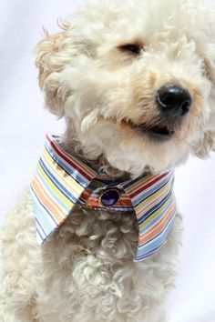 ECO dog collar, multi color stripes, pet collar, recycled pet, pet gifts, pet accessories, pet clothes, weddings on Etsy, $15.00