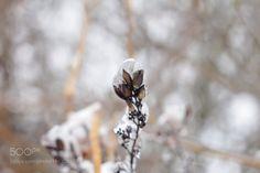 Frozen beauty by ed_shots  http://ift.tt/2kL9xgp