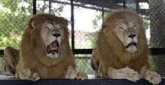 Resultado de imagem para expressões animais engraçadas