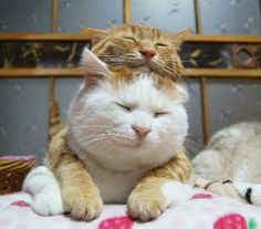 happy cat friends