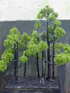 A simple yet effective stand of trees. What attracted me to this picture was the black pot and black soil which give such a wonderful contrast to the green foliage.