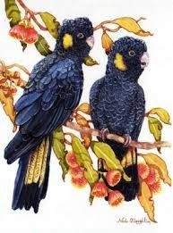 Image result for Paintings of Yellow tailed black cockatoos