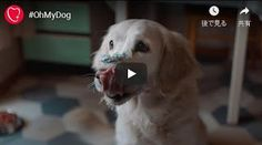 naoparis: 【PUB】【CHIEN】キニナルCMに登場のワンコたち Dogs, Animals, Dog, Animaux, Doggies, Animales, Animal, Pet Dogs, Dieren
