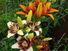 NAŠE ZAHRADY: Flowers Show