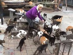 """Crazy Cat Man: New York Animal Lover Turns Home into Sanctuary for Over 300...: Chris Arsenault is crushing the cat lady stereotype. Known as the """"cat man"""" of Long Island, the New York resident has earned this title, transforming his home into a haven for homeless cats and..."""