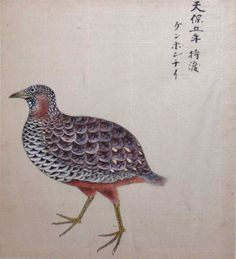 Asian watercolor of a partridge 19th century