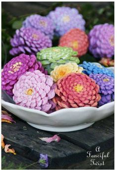 Zinnias out of pine cones