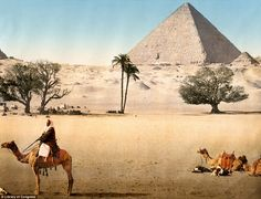 A group of Bedouins, with their caravan of camels, are pictured around 1895, resting in front of the Pyramids of Giza