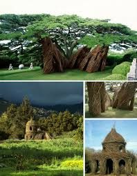 Image result for living tree buildings