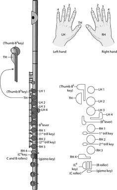 My flute only goes to low c so it doesn't have the b roller since its a begginer flute