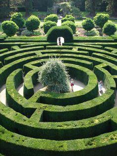 Chatsworth maze garden in England. Weird dream to go into a maze garden.
