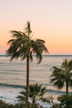 Palm Tree Sunset, Palm Trees, Art Plage, Portrait Photos, Beach Wallpaper, Wallpaper Wallpapers, Beach Aesthetic, Summer Aesthetic, All Nature