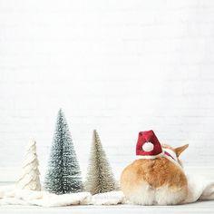 Christmas by AquaTheCorgi