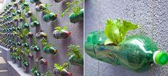 Nada mais saboroso e saudável que legumes e verduras cultivados em casa. Mas para isso, é preciso...