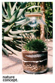 Las w szkle Ekosystem Biosfera Las w słoiku Terrarium #natureconcept #laswszkle #nature #moss #fern #plants #poland #ekosystem #green #laswsłoiku #terrarium #design #love #soil #urbanjungle #plantsfriend #style #fashion #modern #forest #rośliny #mossterrarium #tree #forestforever #mech