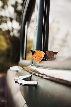 greige design interiors shop and inspiration for the home Autumn Day, Autumn Trees, Autumn Leaves, Hello Autumn, Autumn Song, Autumn Walks, Late Autumn, Autumn Aesthetic, Best Seasons