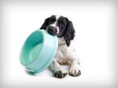 Healthy Dog Meals