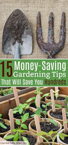 15 Money-Saving Gardening Tips That Will Save You Hundreds - Graceful Little Honey Bee Growing Herbs, Growing Vegetables, Growing Roses, Gardening For Beginners, Gardening Tips, Garden Solutions, Vegetable Garden Design, Veg Garden, Greenhouse Gardening