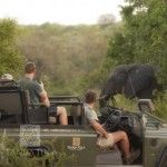 6 African Safari, Wildlife