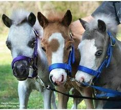 Awww! Sooo cute! #horses I would name the one in the middle moon shine. Then the one on the right silver dust, and the one on the left coconut.