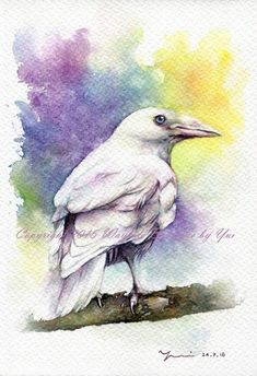 PRINT  Silver Raven Watercolor painting 7.5 x 11