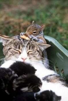The Cat and Her Squirrel (otherwise known as possibly the only time I pin a picture of a cat!)