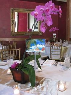 Potted Orchid Centerpieces Different Color