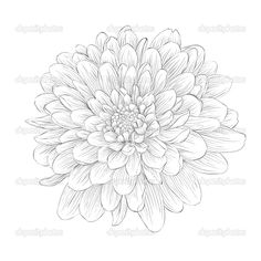 Beautiful monochrome black and white dahlia flower isolated on white background. Hand-drawn contour lines and strokes. — Vector by Jane_Hulinska