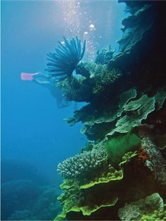 Dive deep into #Australia's waters and explore their colorful coral reefs. #cruising #RoyalCaribbean