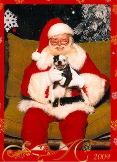 Patsy the Boston Terrier with Santa.